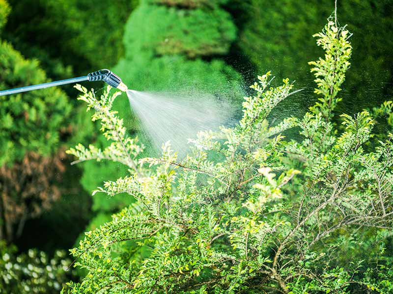 Herbicida Jardinagem